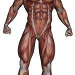zweepslag en spieren